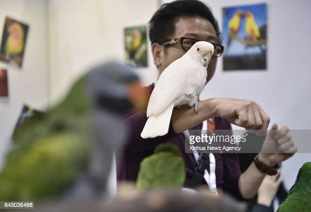 KONG Feb 24 2017 An exhibitor introduces the habits of pet parrots during the 12th Pet Show in Hong Kong south China Feb 24 2017 The pet show kicked...