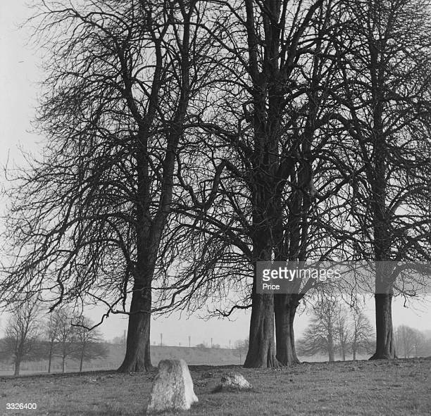 A group of trees where one of the last public hangings of a 'highwayman Robert Snooks ' took place in Boxmoor Hertfordshire