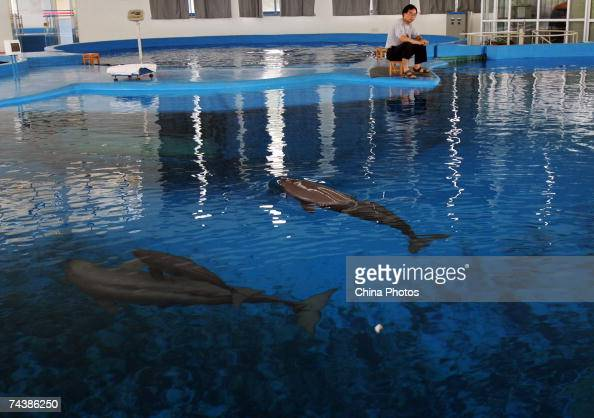 Yangtze River Dolphin Stock Photos And Pictures Getty Images
