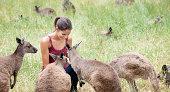 Feeding Kangaroos in the Wild