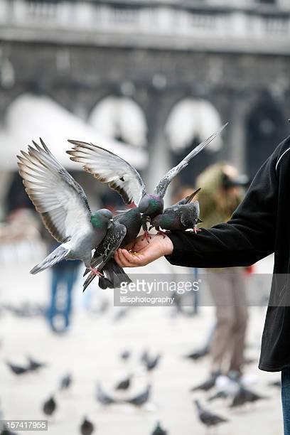 Nourrir les Pigeons à Venise