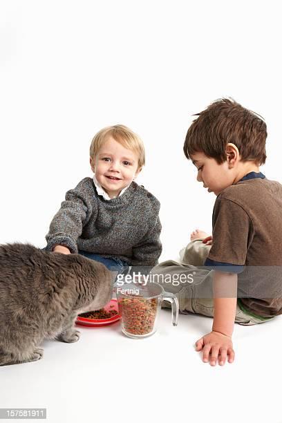 Füttern der cat