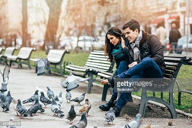 Nourrir les les pigeons
