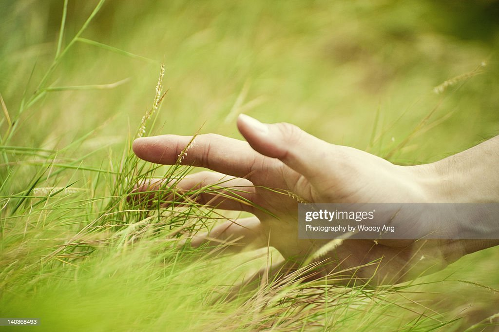 Feel of grass... : Stock Photo