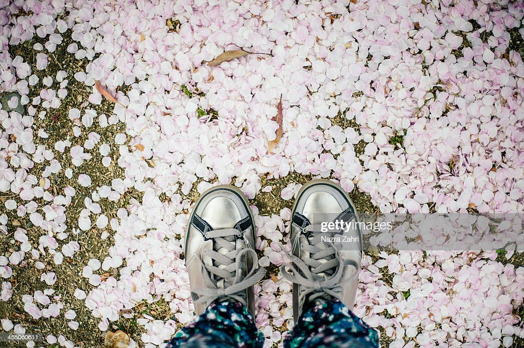 Feet on sakura petals : Stock Photo
