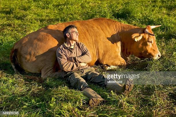 Feierabend auf dem Bauernhof Der Landwirt mit seinem Lieblingsrind in der Abendsonne auf der Weide
