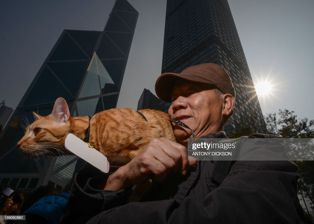 Feline 'Da Zai' sits upon his master's shoulders as they attend a pro-animal rights rally in Hong Kong on January 13, 2013. The rally, organised on social media site Facebook, attracted around 1000 supporters who rallied for the police to take stronger action against the abuse of animals and to protect the rights of animals. AFP PHOTO / Antony DICKSON