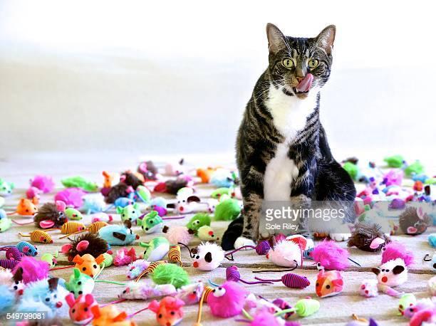 Feline dreams, mice to infinity