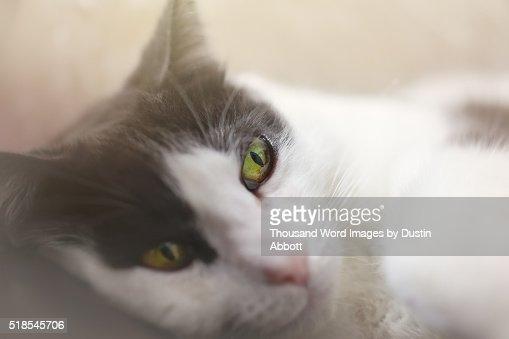 Feline eHarmony Profile