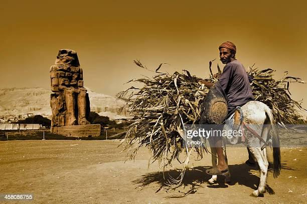 Fellah-Farmer Arbeiter auf einen Esel in der Nähe von Luxor