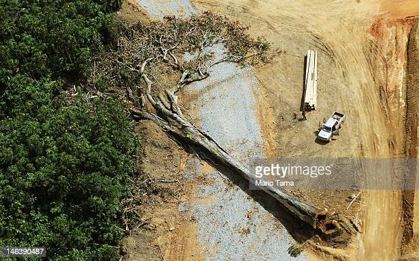 A felled tree lies in the construction site of the Belo Monte dam complex in the Amazon basin on June 15 2012 near Altamira Brazil Belo Monte will be...