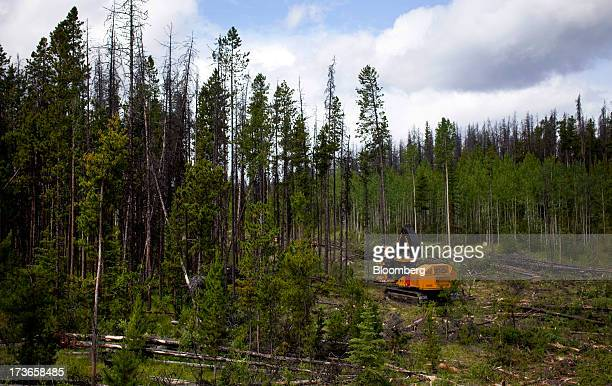 A feller buncher cuts down trees on a block of land west of Quesnel British Columbia Canada on Wednesday July 10 2013 West Fraser Timber Co the...