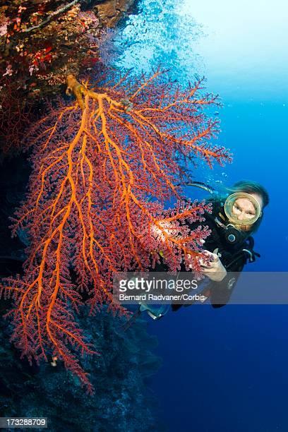 femal diver swimming towards sea fan