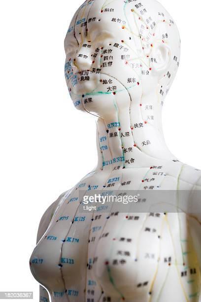 Female acupuncture model