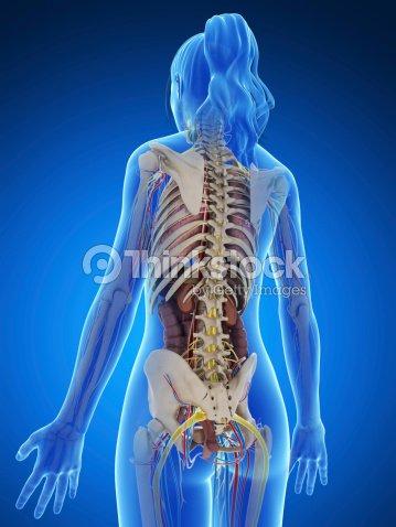 Female Anatomy Back Stock Photo Thinkstock