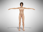 A woman body for books on anatomy 3d render on greyA female nude body anatomy for books 3d illustration on greyA woman body for books on anatomy 3d render on whiteA female body anatomy for books 3d re