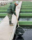 Young female worker catching fish from reservoir with hoop net on sturgeon farm