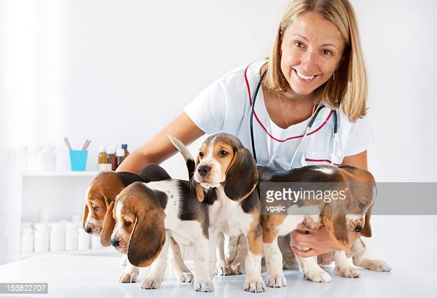 Female Doctor Veterinarian Having Fun with group of puppies