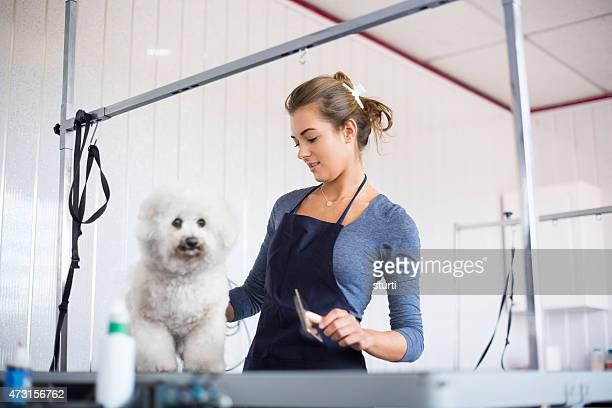 Weibliche Hund groomer Zähne ein bichon Frisé Hund