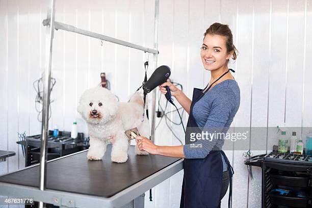 Weibliche Hund groomer mit bichon Frisé Hund