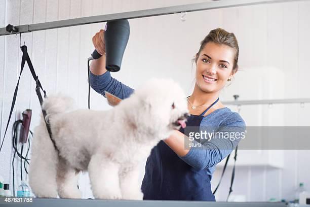 female dog groomer with bichon frise dog