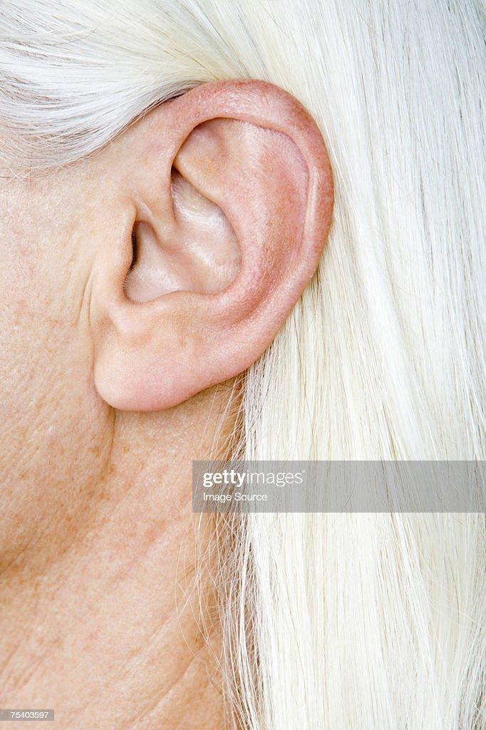 Ear - Wikipedia