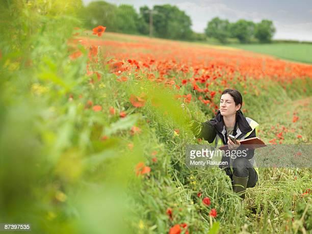 Female Ecologist In Poppy Field