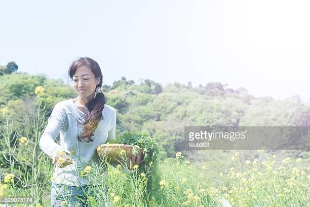 Weibliche Unternehmer pflücken Bio-Gemüse und Kräutern
