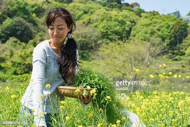 female entrepreneur picking organic herbs and vegetables