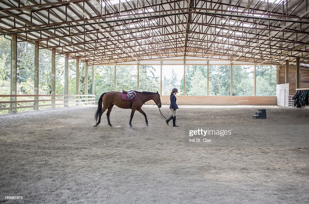 Female equestrian walking horse in training arena : Stock Photo