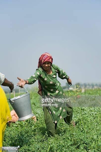 Female farm workers working in a field, Farrukh Nagar, Gurgaon, Haryana, India