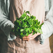 Female farmer wearing pastel linen apron and shirt holding bunch of fresh green mint in her hands, square crop. Organic produce or local market concept