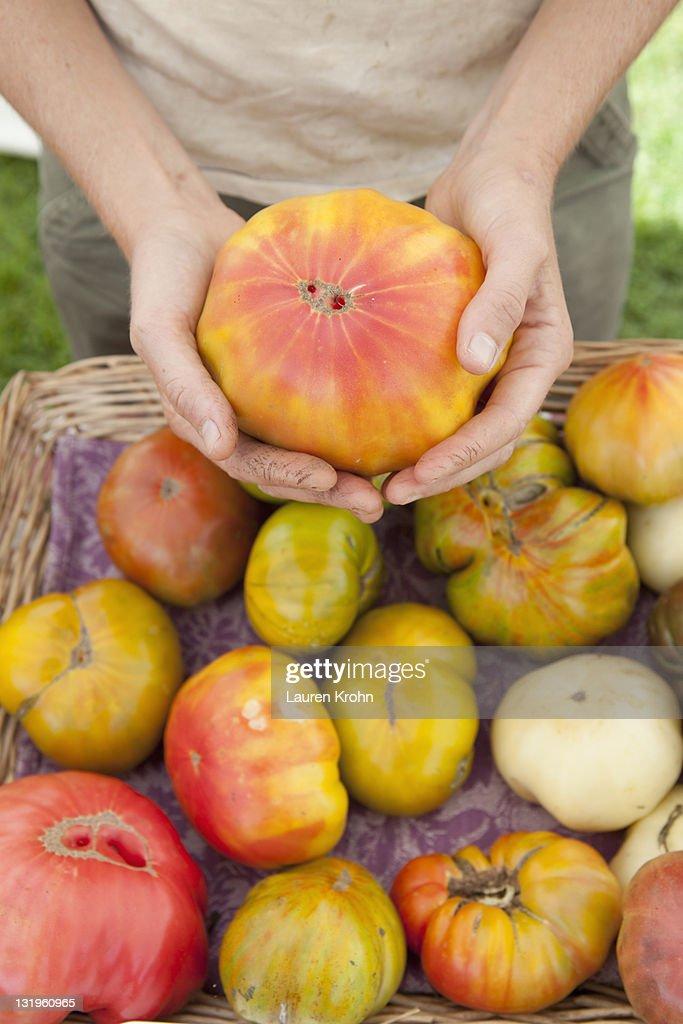 Female farmer holds large heirloom tomato : Stock Photo