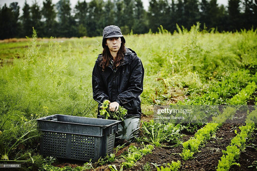 Female farmer kneeling in field bundling lettuce