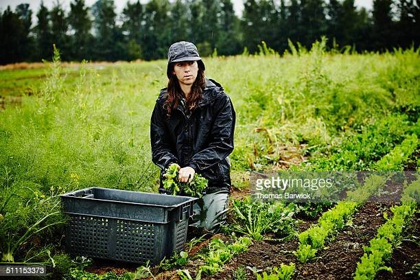 Female farmer kneeling in field bundling lettuce