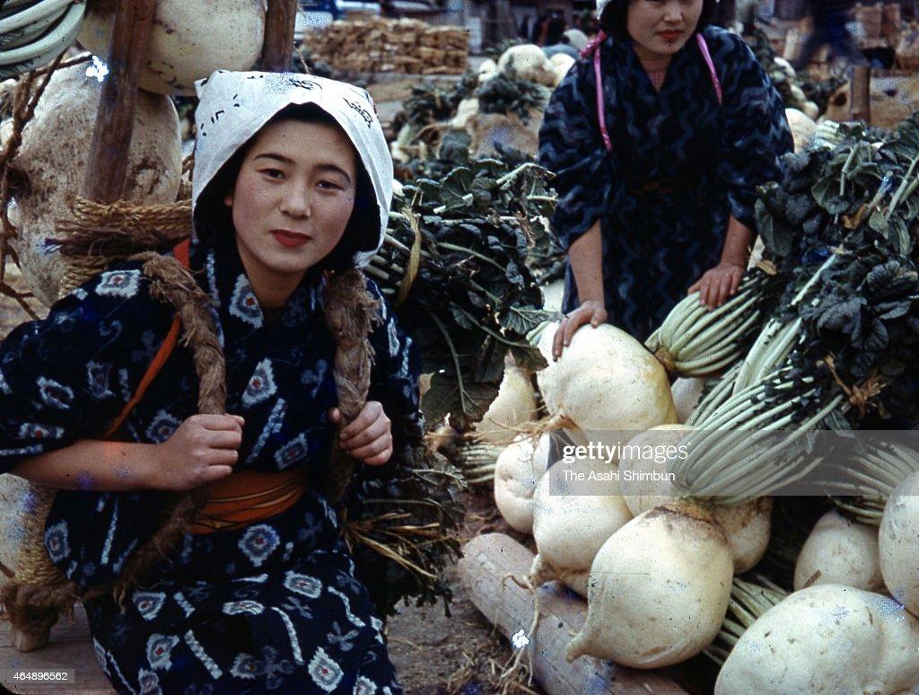 how to grow sakurajima radish