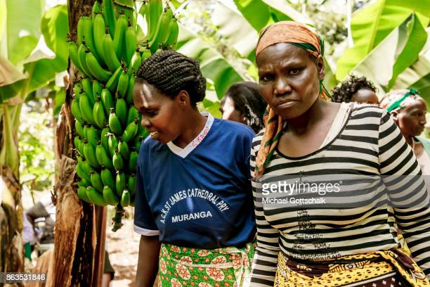 Female Farmers on the field of a farm on which plants grow with the support of the irrigation system of local farming cooperative Mitooini The field...