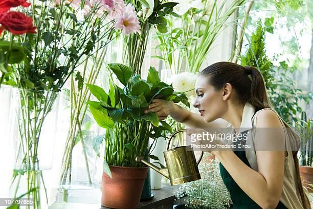 Female florist watering plant