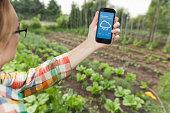 Female gardener holding weather app on smart phone