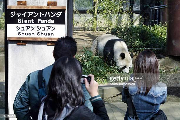 Female giant panda Shuan Shaun from Mexico City's Chapultepec Zoo walks in her enclosure at Tokyo's Ueno Zoo February 26 2004 in Tokyo Shuan Shuan...