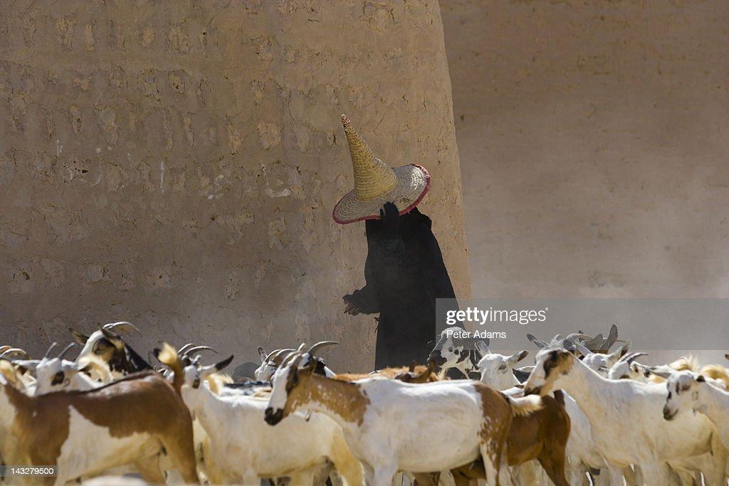 Female Goat Herder, Al Wadi Dawan, Yemen : Stock Photo