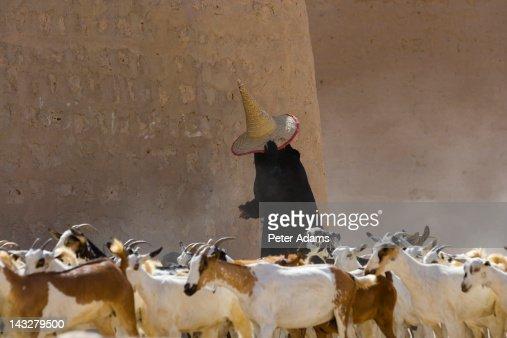 Female Goat Herder, Al Wadi Dawan, Yemen : Bildbanksbilder