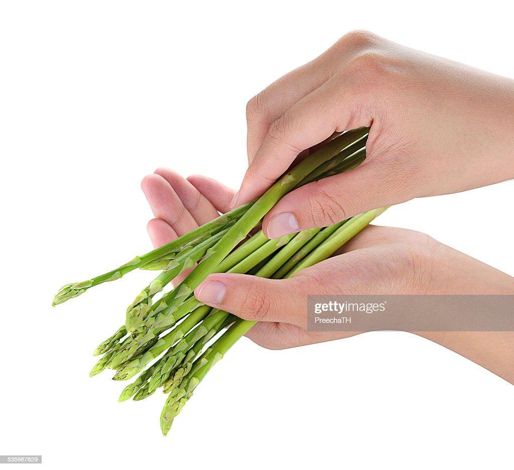 female hand holding fresh asparagus isolated on white background : Stock Photo