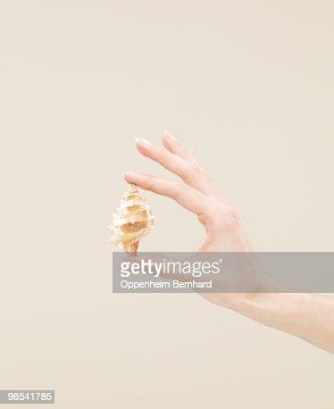 female hand holding hermit crab shell : Stock Photo