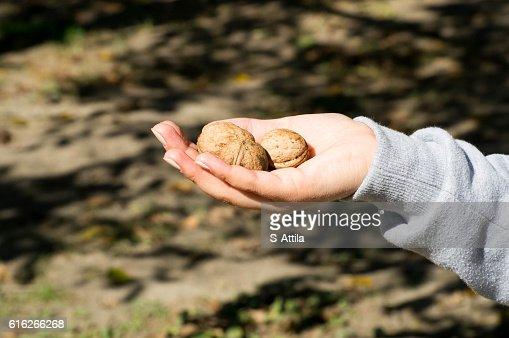 Female hand holding three walnuts : Stock Photo