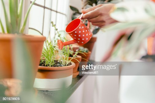 Female hand watering plant on window sill with a tiny watering can