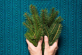 Female hands hold branches of fir tree on a blue knitted background. Christmas concept. Top view.