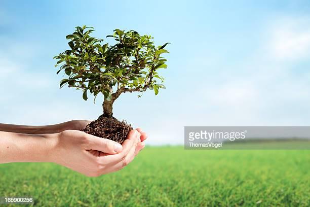 Female hands holding bonsai tree in rural scene