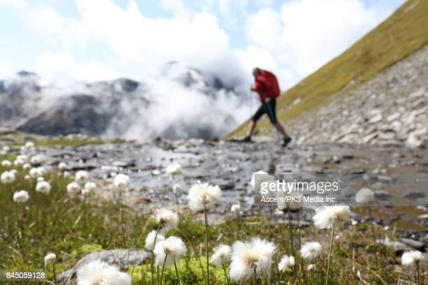 Female hiker crosses mountain stream, alpine meadow