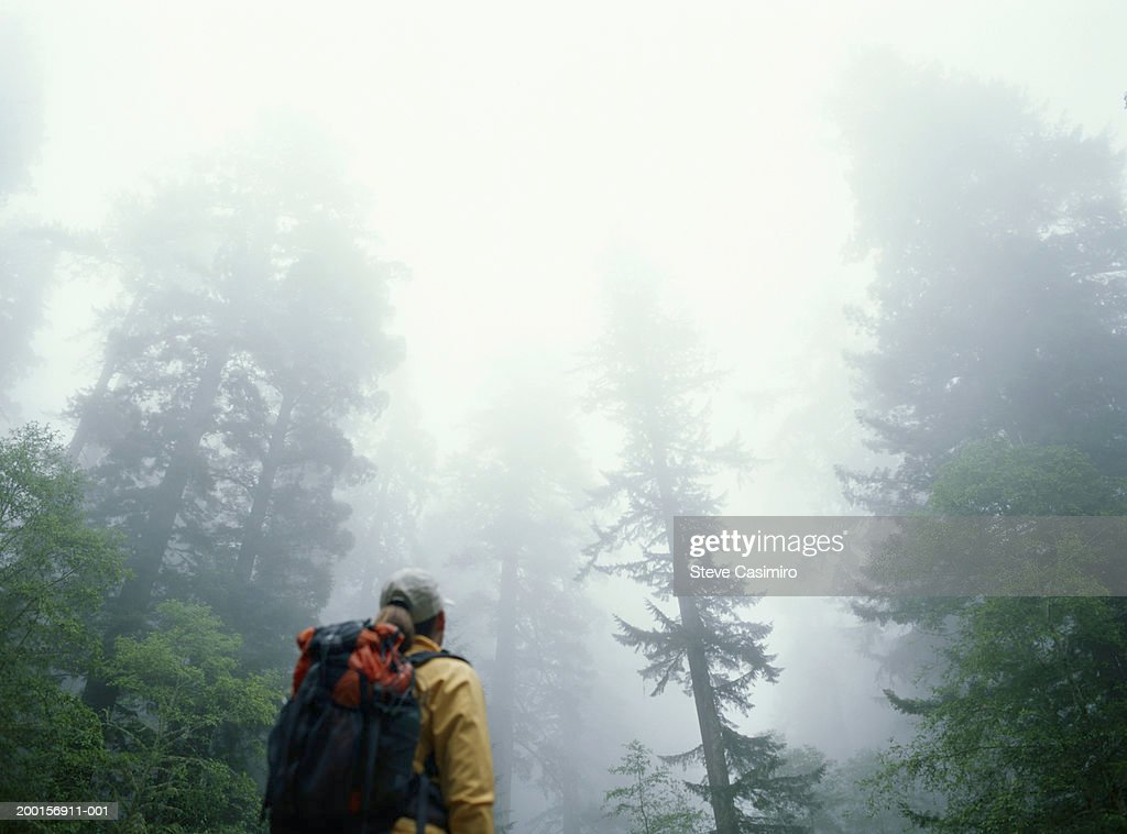Female hiker in forest shrouded in fog, rear view